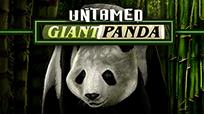 Игровые автоматы Untamed Giant Panda